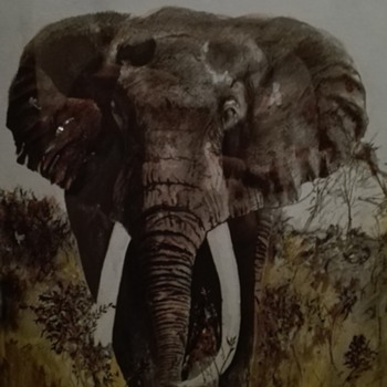 elephant painting (style David Shepherd...but don't know this painter/signature) - Fine Art