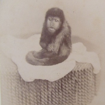 The pet monkey photograph - Photographs
