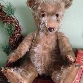 Mystery Bear from Canada