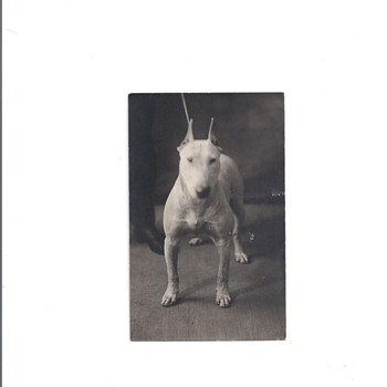 VINTAGE POSTCARDOF A DOG
