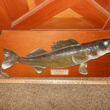 Petey The Walleye Pike From 1950 - Animals