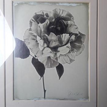 art pictures - Fine Art