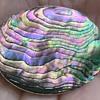 Miraculous Abalone or Paua Brooch