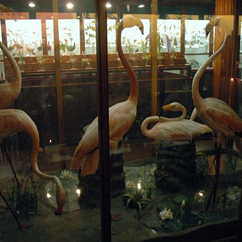 Fairbanks Museum - Vermont - Victorian Era
