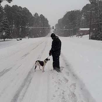 Oreo learns about snow (again? still?) - Animals