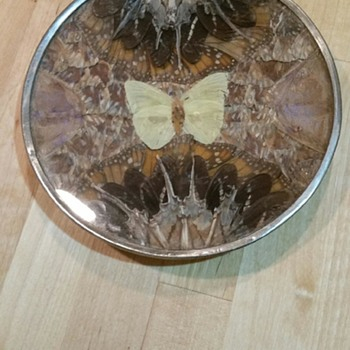Butterfly Wing Plate - Animals
