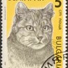 """1989 - Bulgaria """"Cats"""" Postage Stamps"""