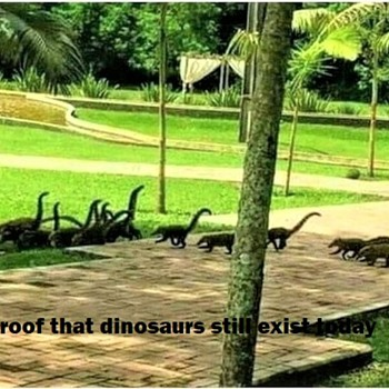 proof that dinosaurs still exist today - Photographs