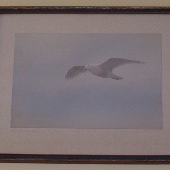 """Seagull Water Color """"The Wanderer""""  - Fine Art"""
