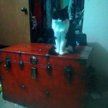 Vintage (1930s or 1940s ?) Trunk/ Chest - Furniture