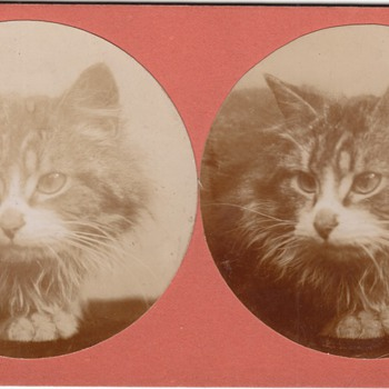 Cat Stereoview Stereograph Collection Jim Linderman - Photographs