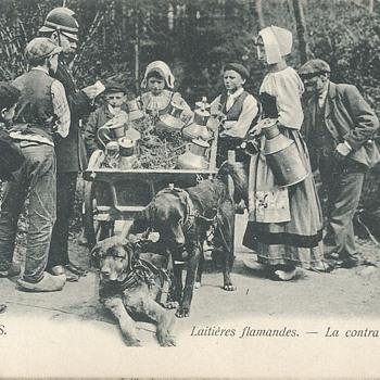 LAITIÈRES FLAMANDES - La CONTRAVENTION. - Postcards
