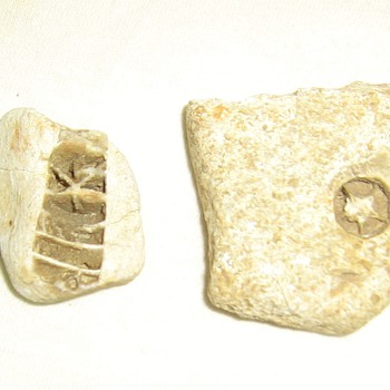 Star fossils from Missouri - Native American