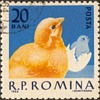"Romania - ""Poultry"" Postage Stamps"
