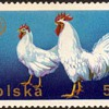 "Poland - ""Poultry"" Postage Stamps"