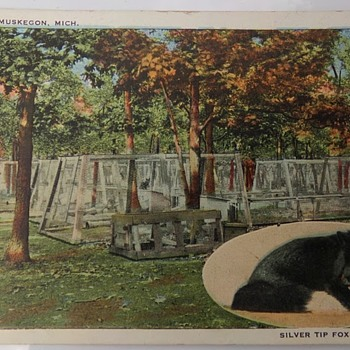 Fox (Type of Canine) Farm, Early 1900s - Animals
