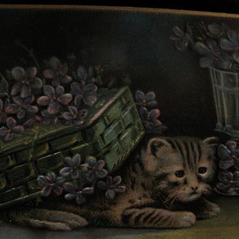 1911 Cat postcard - Postcards