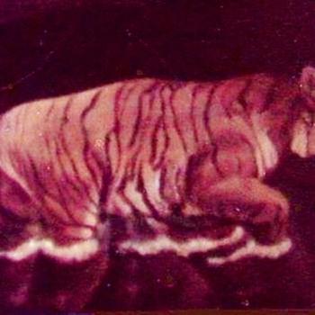 """""""Tiger walking in Water"""" - Fine Art"""
