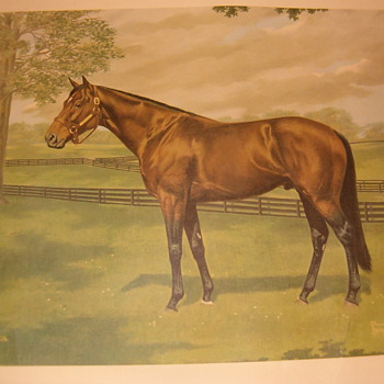 Horse Pictures by Allen F Brewer Jr. - Posters and Prints