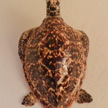 Taxidermy Sea Turtle from Japan - Soldier Bring-Back - Animals