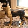 Cast Iron Boston Terrier Doorstop