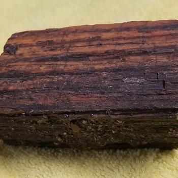 225 Million Year Old Petrified Redwood  - Animals