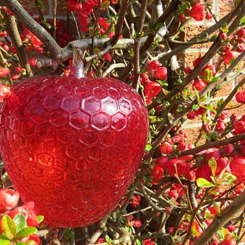 Very Large Red Glass Apple - Art Glass