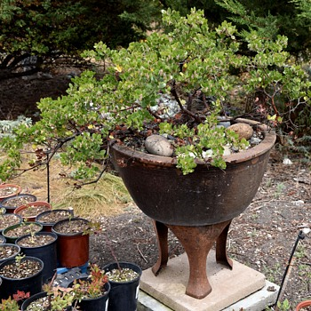 A few pots with plants in them at my nursery - Pottery