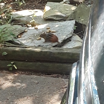 new critter(s) in the yard? - Animals