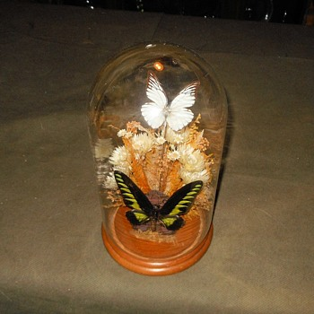 Taxidermy Tuesday Glass Dome With Two Butterflies Trogonoptera Brookiana Birdwing Male - Animals