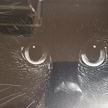 Black Cat - Scratchboard Drawing - Fine Art