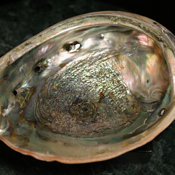 Two Really Great Abalone Shells