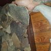North Carolina native American pottery shards