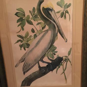 Audubon Bien Edition Brown Pelican - Animals