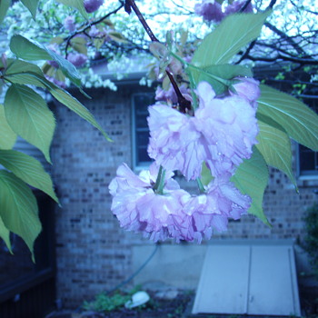 Spring is in the air - Photographs