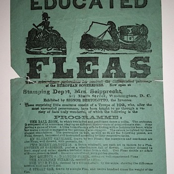 1860s/1870s Signor Bertolotto's Educated Fleas Broadside