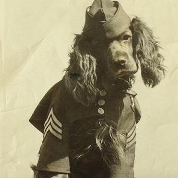 Jefferson Barracks mascot 1943 - Photographs