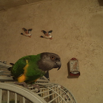 My Bird - Joey