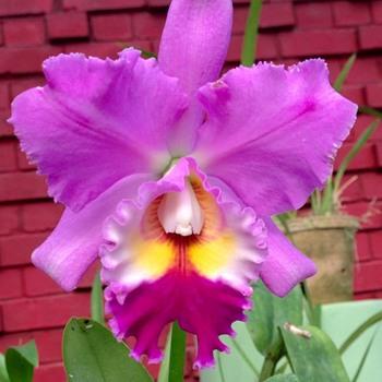 Botanical Orchid Garden in Kandy Sri Lanka