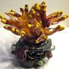 anemone art glass