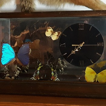 Taxidermy Tuesday An Attractive Butterfly Terrarium Display Plus A Tacky Clock - Animals