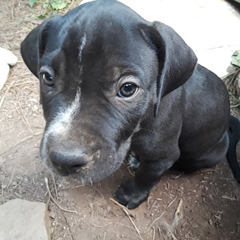 a few little puppydog faces - Animals