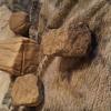 Native,american abrading stone artworks