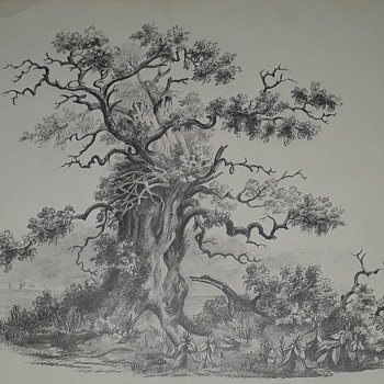 Old pencil drawing Turnbull superfine board - Fine Art