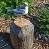 Seagull Garden Ornament