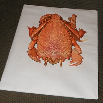 Taxidermy Tuesday A Crab That Looks Like a Louse Spanner Crab - Animals