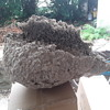 My wasps nest