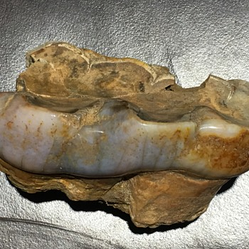 Baby/Youth Mastodon Shed Tooth  - Animals