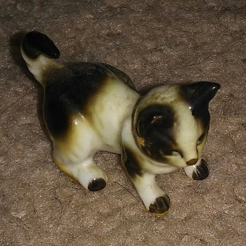Small cat - Animals