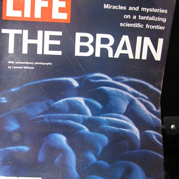 The Brain -- Life Magazine 1971 - Paper